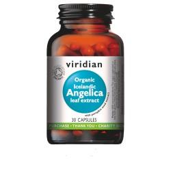 Εκχύλισμα Οργανικής Αγγελικής και Κολοκύθας | Organic Angelica and Pumpkin seed Extract | 30 καψ.